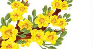 Decal hoa mai trang trí